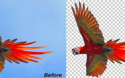 5 Best Tools to Remove Background from Images